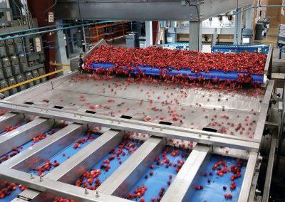 Cherry Fruit Sorting Machine