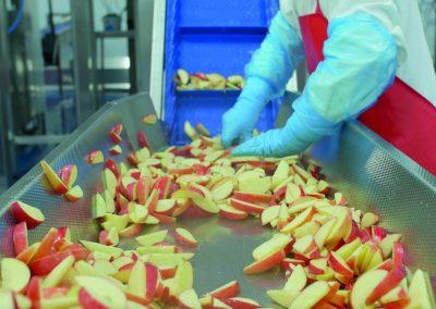 Fruit conveyor