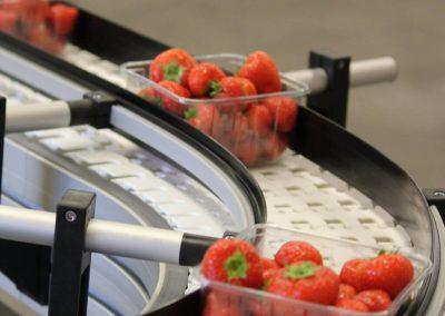 Fruit Conveyor Punnet